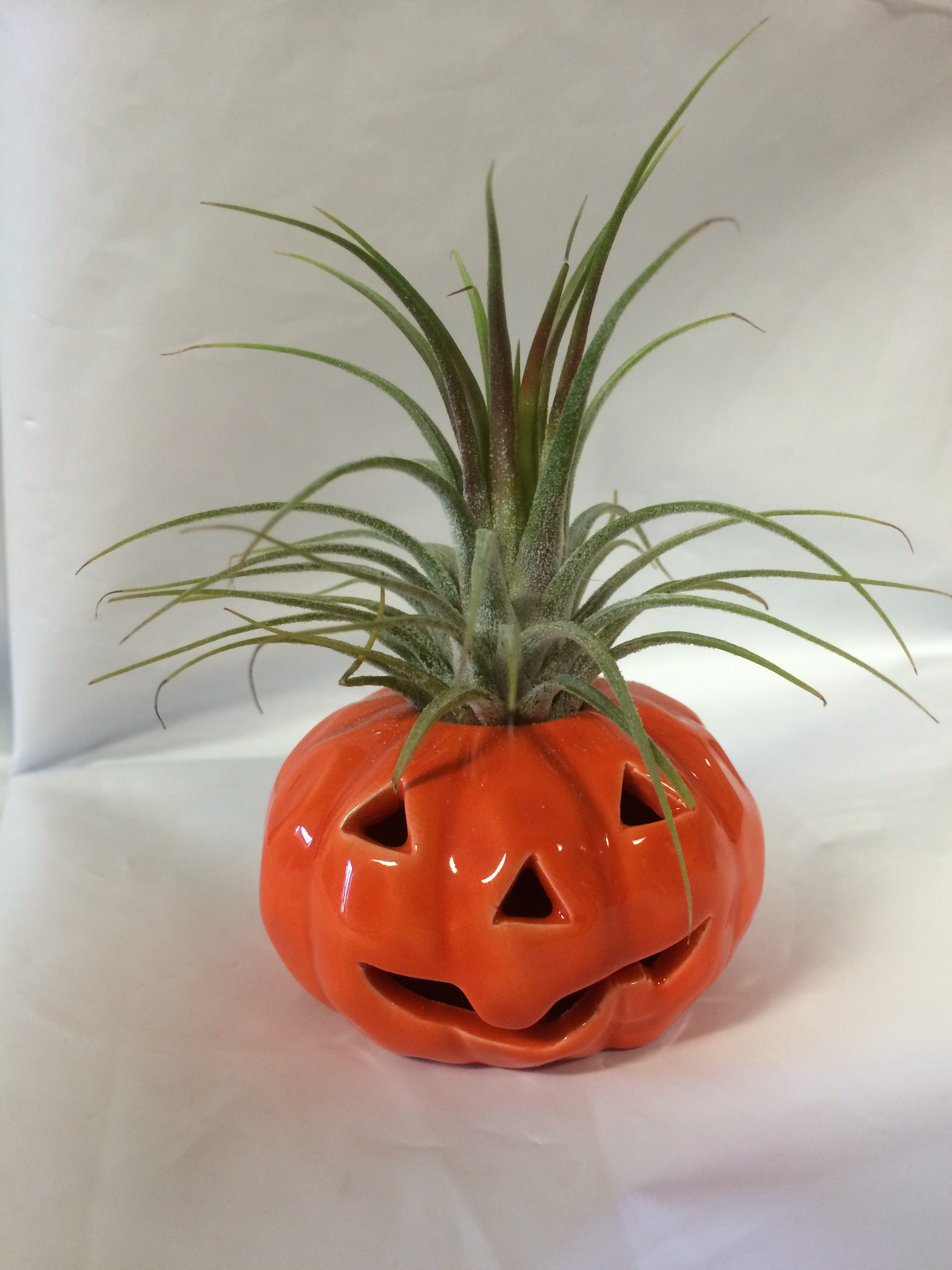 ceramic pumpkin, air plant, fall, easy care, soilless, no soil planter