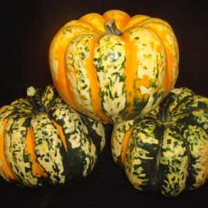 Our carnival squash is sold 10 per 1 1/9 bushel box.