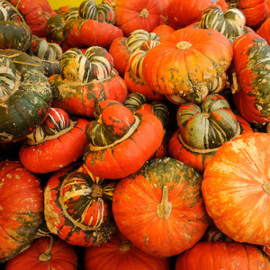 The mexican hat gourd is very unique looking!  We sell them 10 per 1 1/9 bushel box.