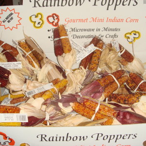 Our rainbow poppers is an assortment of mini indian corn is sold as 36 bunches of 3 per case.