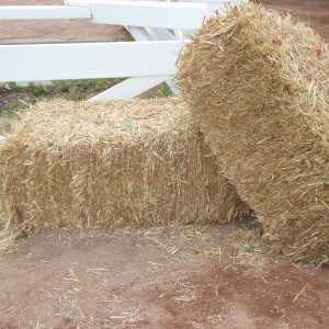 Our standard-sized straw bales are sold as singles or as pallets.