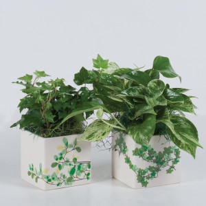 ivy, ceramic, planter