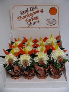 TURKEY MUM DISPLAY CASE