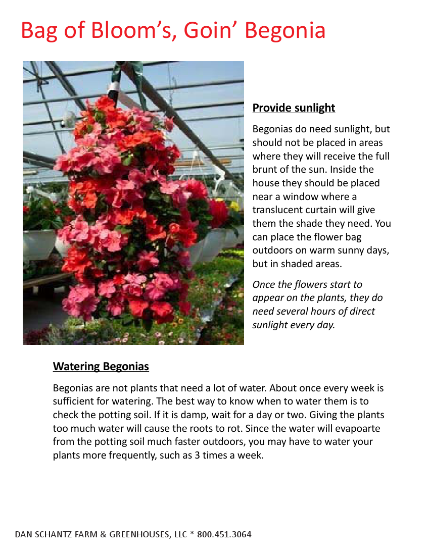 2013 Begonia Bag Of Bloom Care Instructions