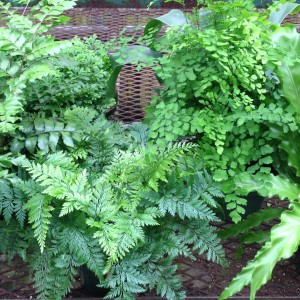 foliage, ferns