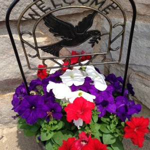 Petunia Welcome Planter